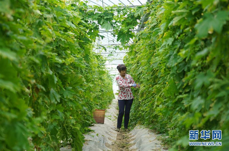 (经济)(3)富硒果蔬富农家