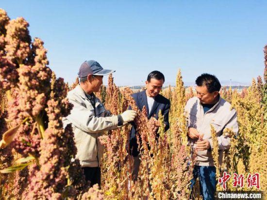 图为文玉庭(左一)和村民们到藜麦核心试验示范点观摩学习。 张婧 摄