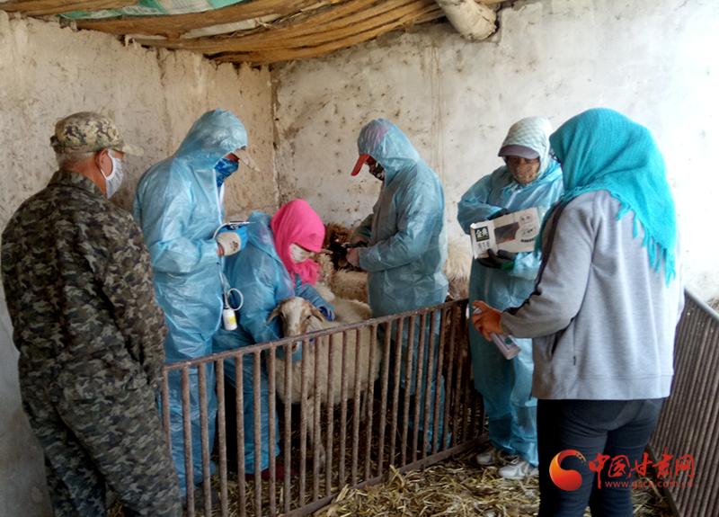 瓜州:动物防疫忙起来 群众腰包