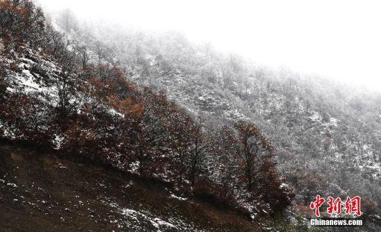 甘肃迎大范围降雪 崆峒山秋景和