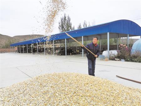 平川区籽用葫芦丰收