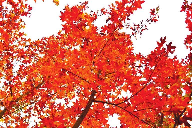 出彩啦!兰州高校秋景惊艳来袭,快到秋日调色盘里pick你的母校