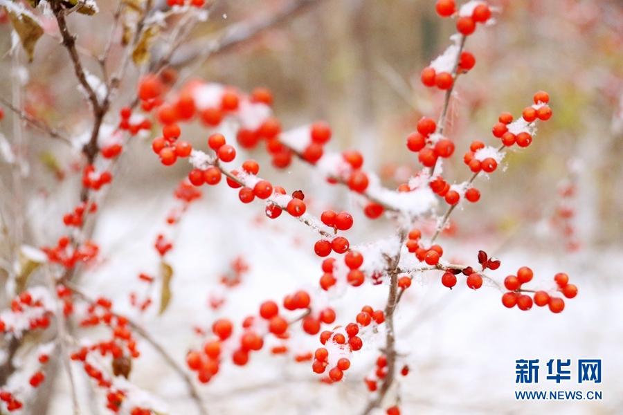 【大美甘肃】古城冬日降初雪