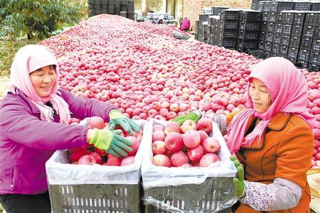 特色林果 助农增收