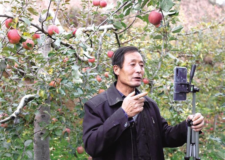 陇南礼县苹果5分钟卖出1.3万斤