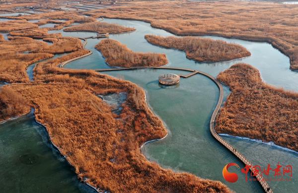 甘州:冬日湿地迎客来