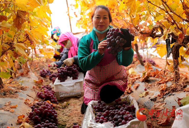 临泽:小鸭村的大产业