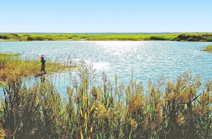 民勤青土湖水域面积扩大到26.7平方公里