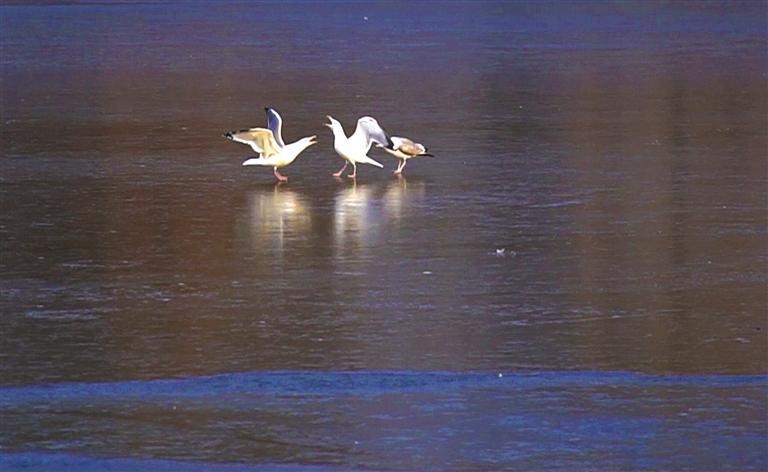 兰图|静谧的湿地