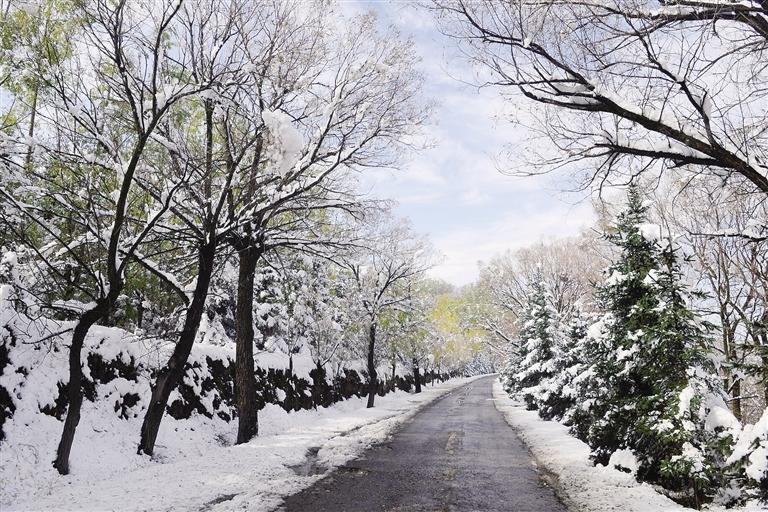 临夏州冬日里的乡间小路
