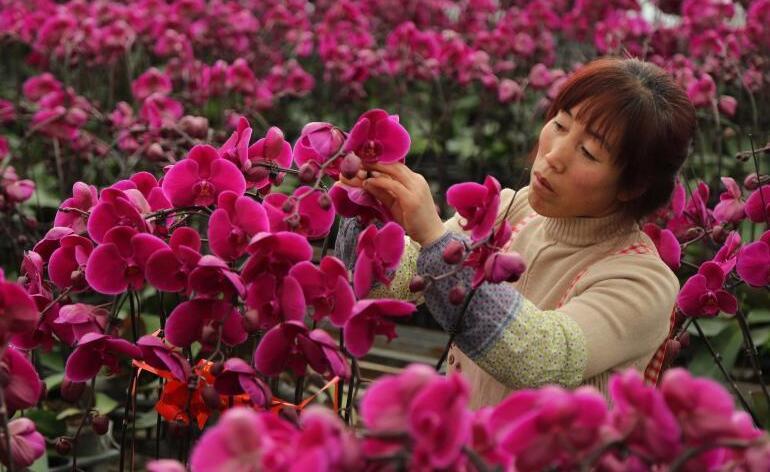 甘肃临洮:花卉产业助增收