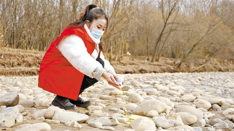 保护兰州越冬候鸟 志愿者投食200斤