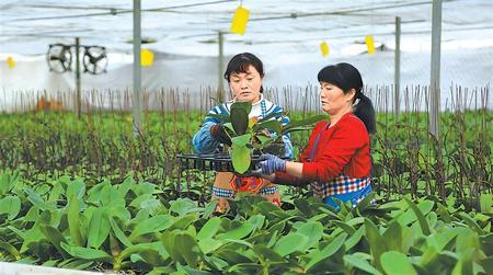 临洮县花卉产业蓬勃兴起