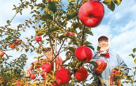 从培育产业到制定标准的飞跃 ——灵台县推进苹果产业转型升级纪实