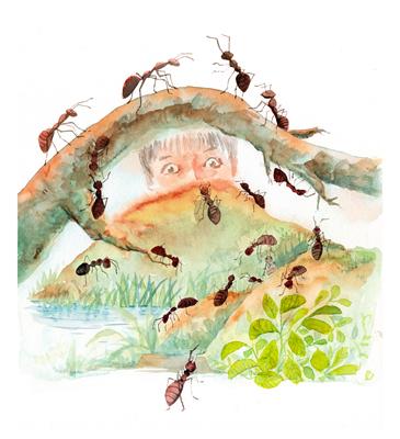 《下里巴虫》:手机镜头里的昆虫记