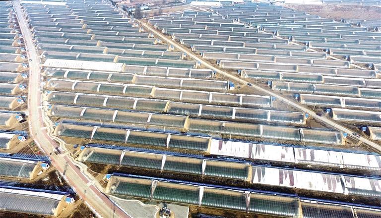 临夏州永靖县大力发展蔬菜种植产业