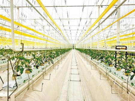 景泰全力推进富民产业建设 促农增效