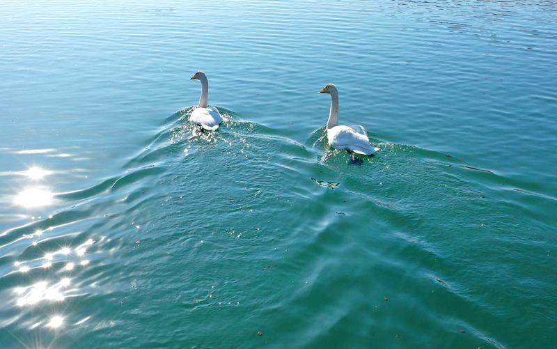 【飞阅甘肃】张掖国家湿地公园:碧波荡漾鸟翩飞
