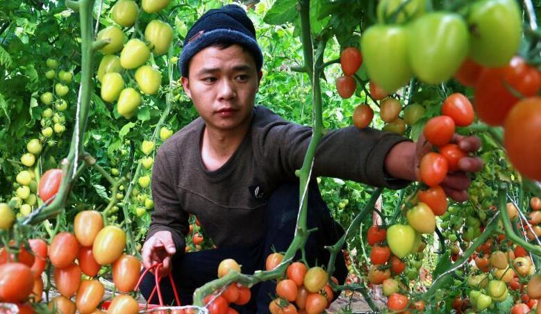 甘肃敦煌:设施果蔬供应节日市场