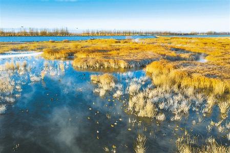 大批候鸟在民勤石羊河国家湿地公园栖息觅食