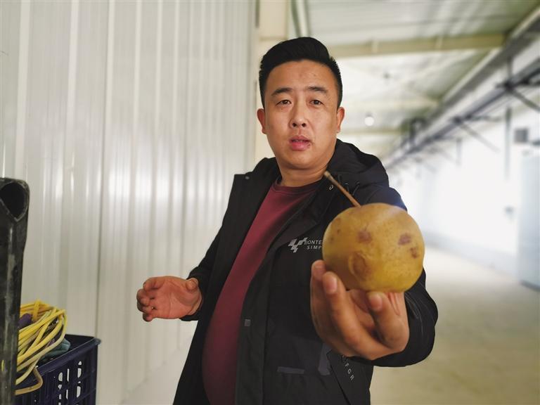 卫万铎:乡村软儿梨 走向大市场