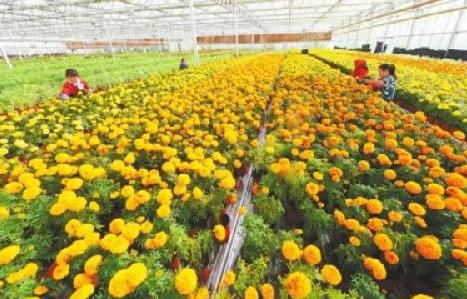 甘肃省国家农业科技园区总数达10家