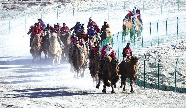 酒泉肃北举办骆驼文化旅游节