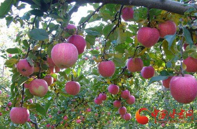 庄浪:聚力产业发展 促进农业转型升级