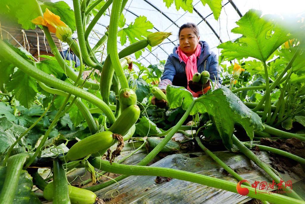 【陇拍客】甘肃张掖:天冷蔬菜产销热