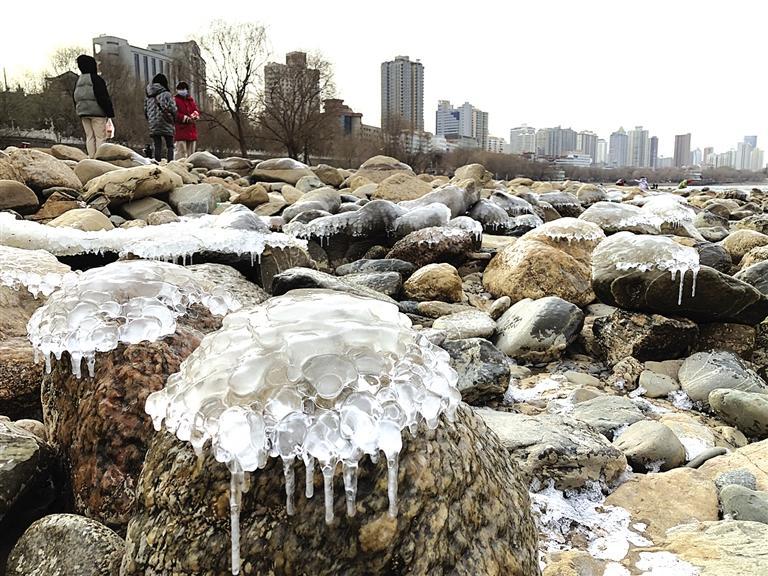 兰州:水母上河滩?