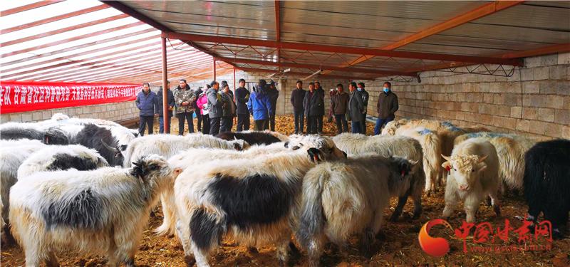 天祝:农业科技培训助推农村振兴