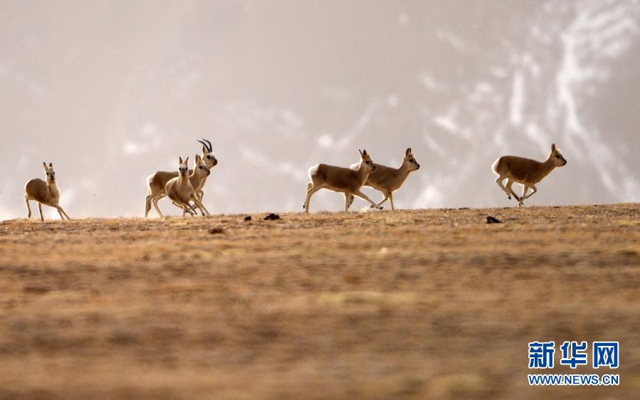 冬日哈尔腾:野生动物的乐园