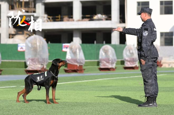"""【陇人相·聚焦2021甘肃两会】我的警犬兄弟""""米拉"""""""