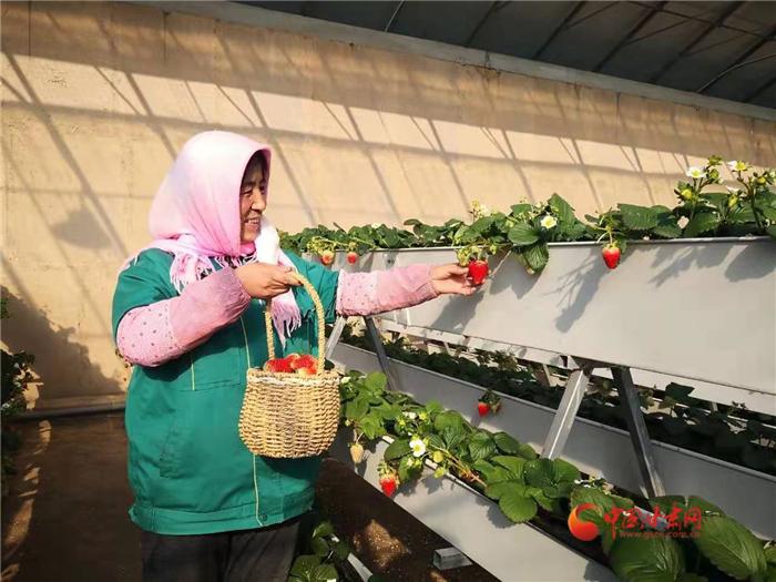 """【新春走基层】兰州新区的""""莓""""好生活"""