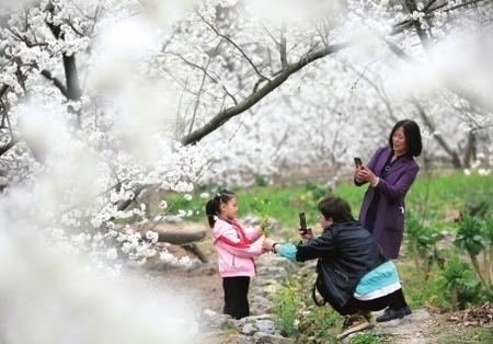 陇南武都:樱桃花开游客来