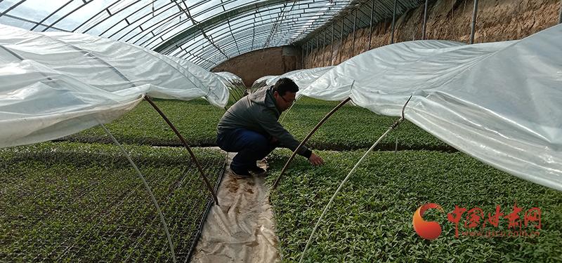 灵台:人勤春来早 设施蔬菜生产正当时