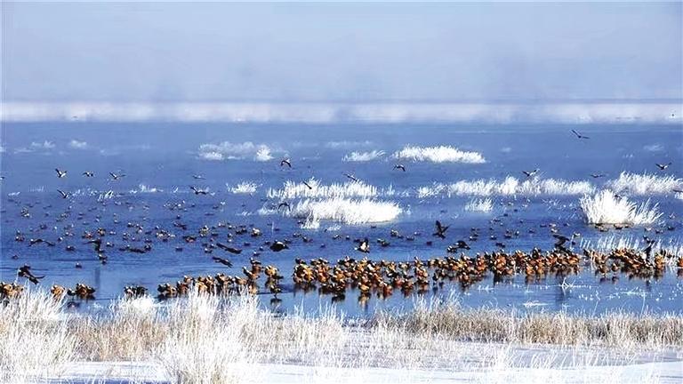 石羊河国家湿地公园:冰消雪融 水鸟飞翔
