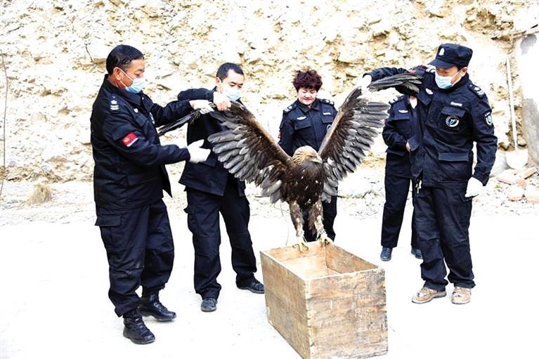 祁连山国家公园张掖分局救助金雕