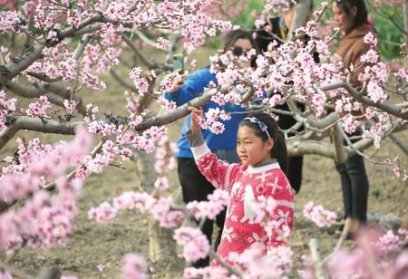 陇南武都区:桃花盛开春意浓
