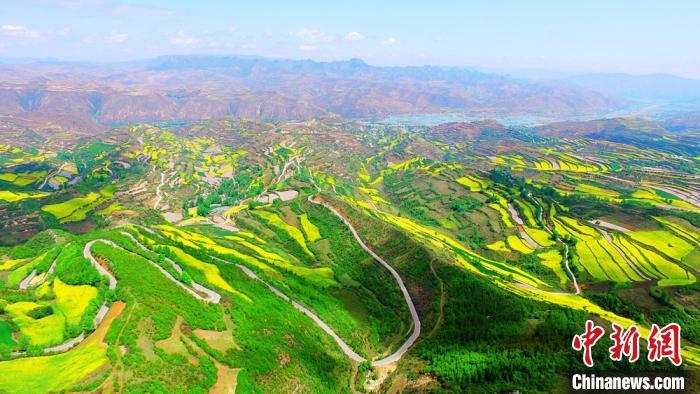 图为定西市漳县国家4A级森林公园贵清山公园一带,航拍镜头下,翠绿的树木与金黄的油菜花相映成趣。(资料图) 王金生 摄