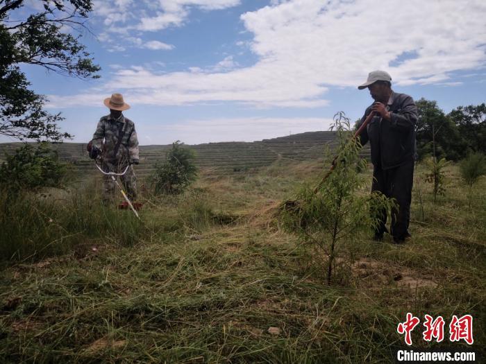 图为定西市安定区的福州林内,护林员在管护树木。(资料图) 杜萍 摄