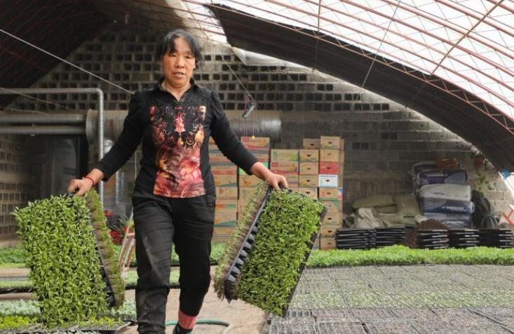 甘肃肃州:蔬菜育苗忙