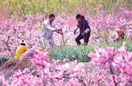 陇南武都区:田间套种促增收