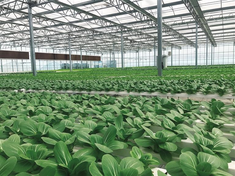 榆中做大做强高原夏菜产业 高品质蔬菜走进千家万户