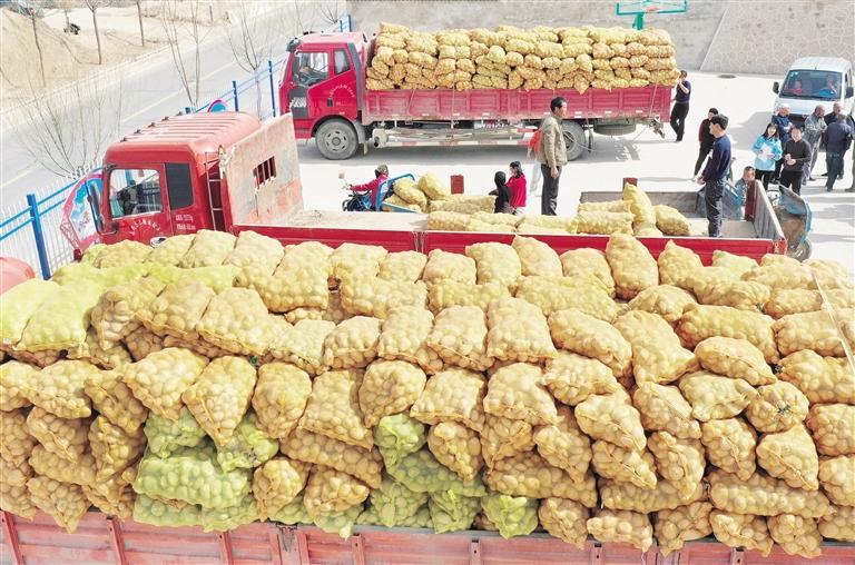 临夏州永靖县农业农村局组织开展送优质种子下乡活动