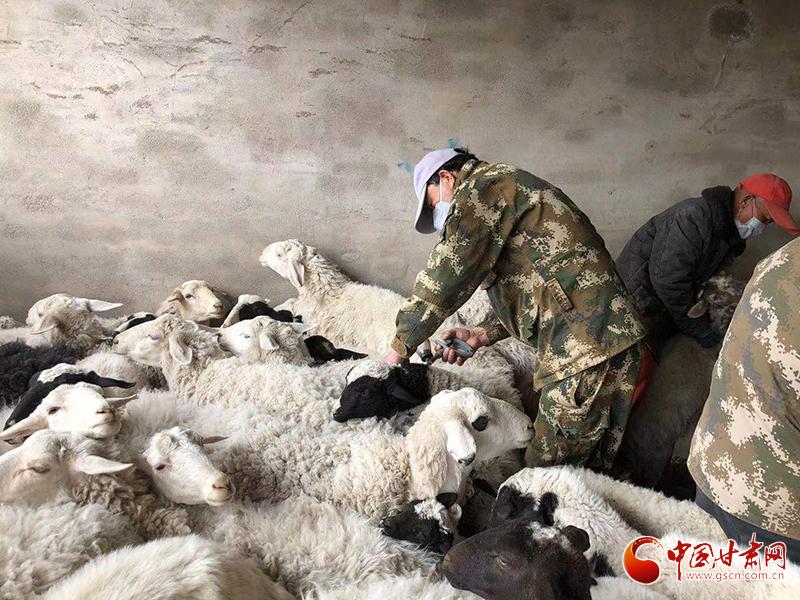 酒泉市肃北县多措并举扎实做好春季牲畜防疫工作