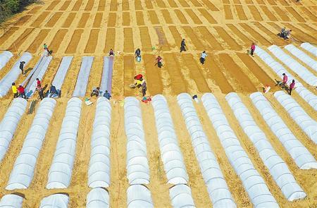 又是一年春耕时——甘肃省各地全力护航春耕备耕扫描