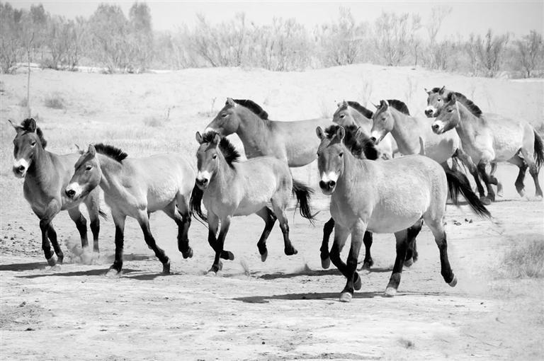 """武威荒漠野生动物园新园区""""五一""""开园"""