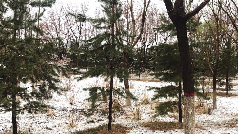 酒泉嘉峪关迎来雨雪天气