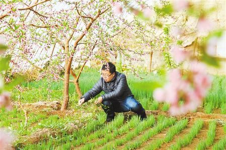 甘肃:时令催人耕种忙,不误田间一季春
